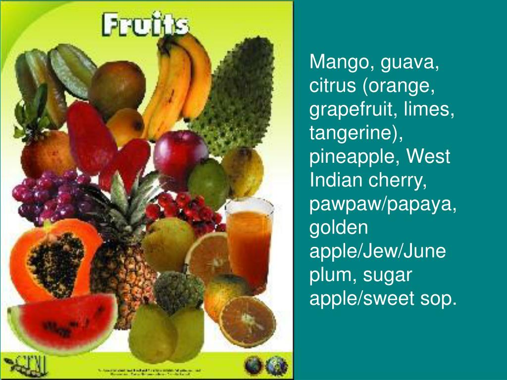 Pineapple Guava Bush