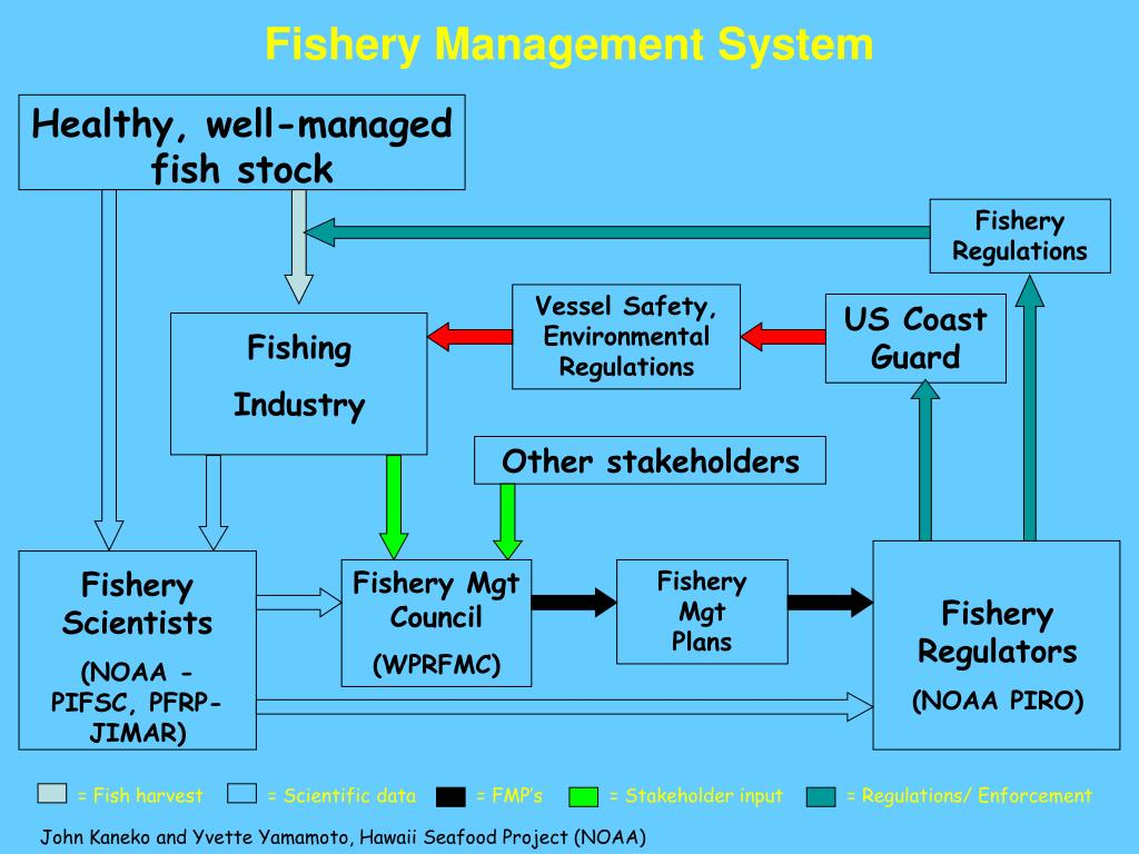 Healthy, well-managed fish stock