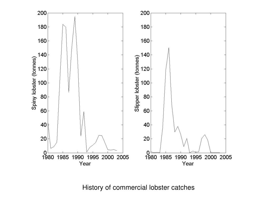 History of commercial lobster catches
