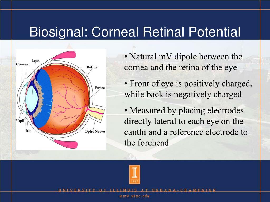 Biosignal: Corneal Retinal Potential