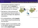 structure and function of the vertebrate gut13