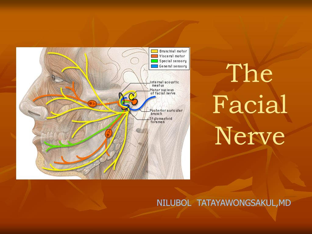 The Facial Nerve