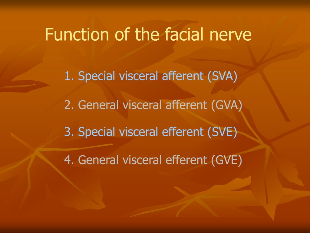Function of the facial nerve