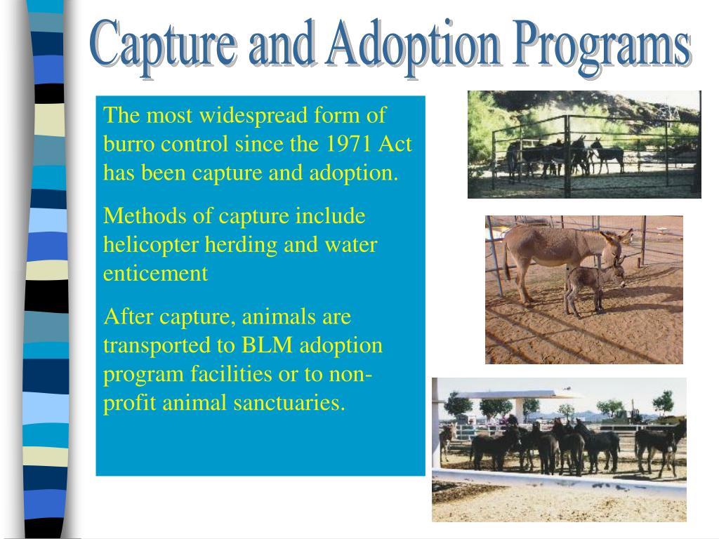 Capture and Adoption Programs