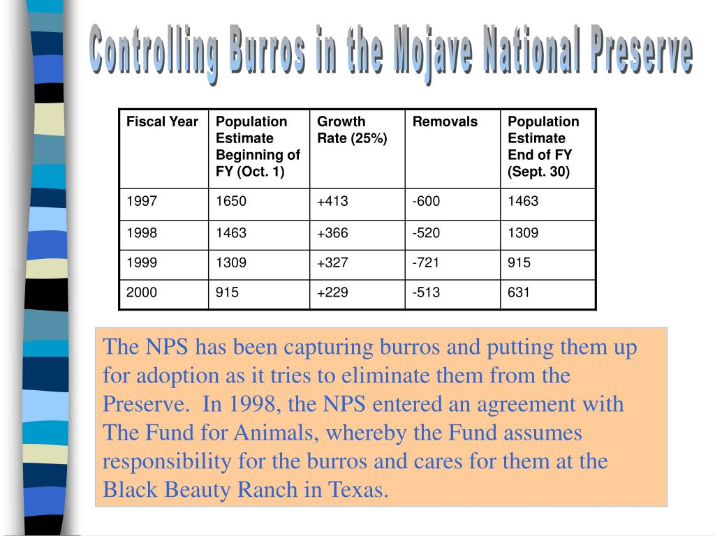 Controlling Burros in the Mojave National Preserve