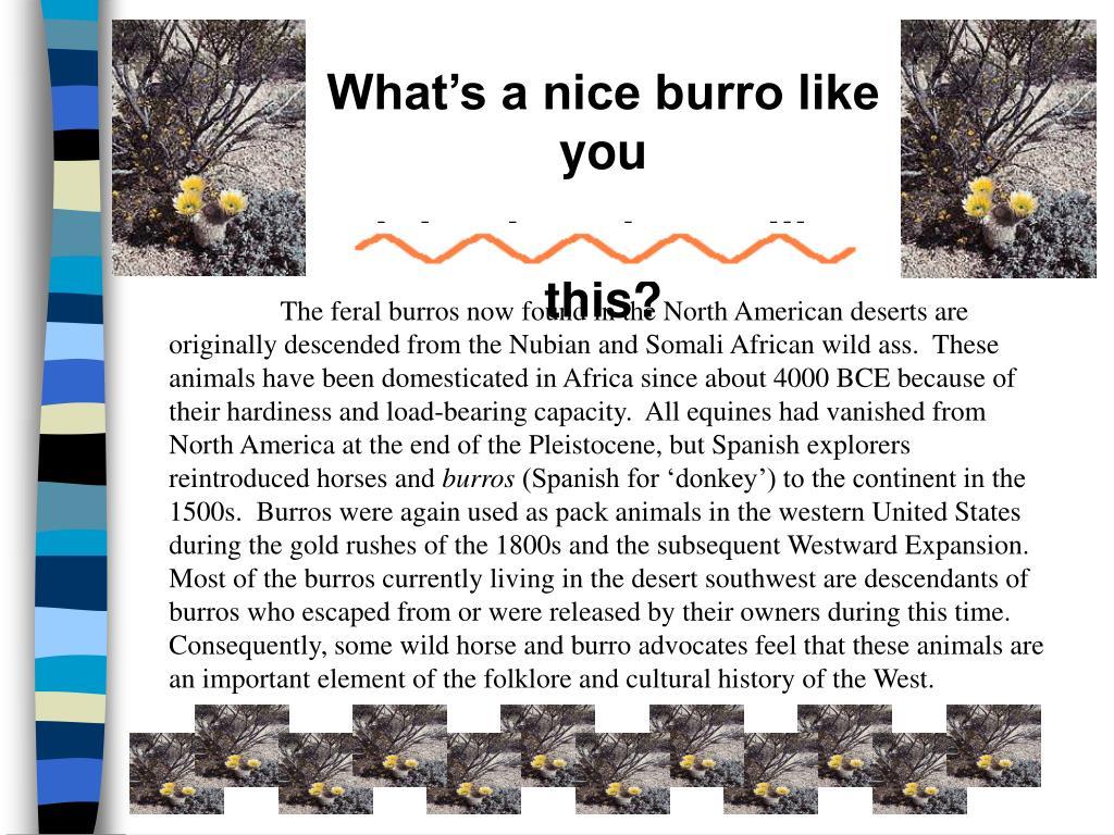 What's a nice burro like you
