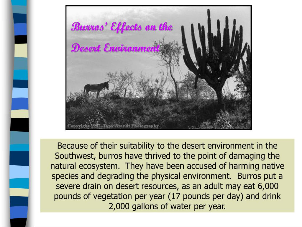 Burros' Effects on the