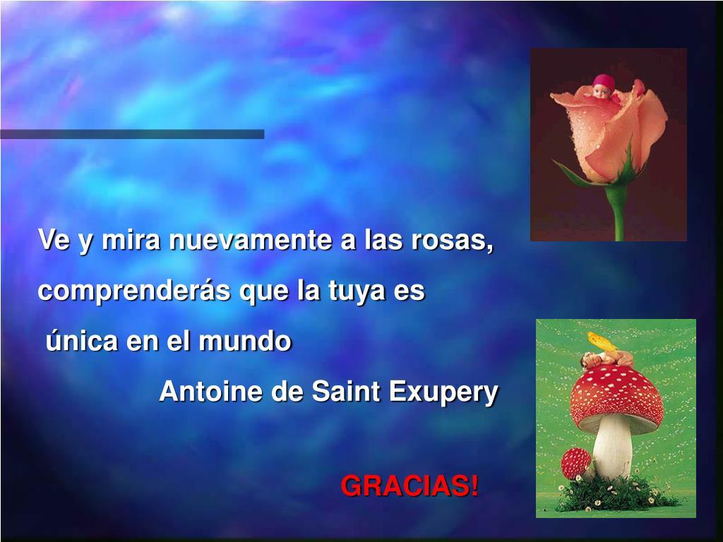 Ve y mira nuevamente a las rosas,