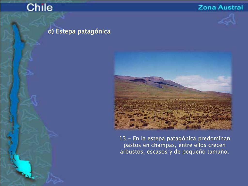 d) Estepa patagónica