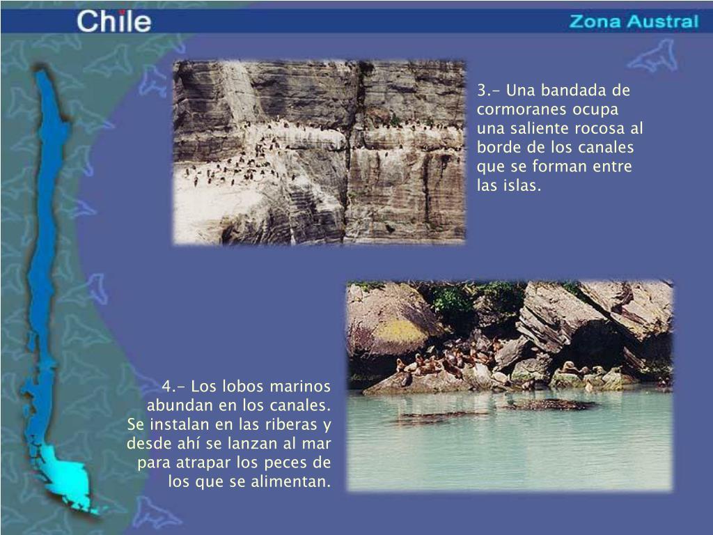 3.- Una bandada de cormoranes ocupa una saliente rocosa al borde de los canales que se forman entre las islas.