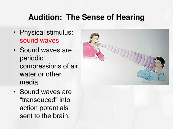Audition the sense of hearing
