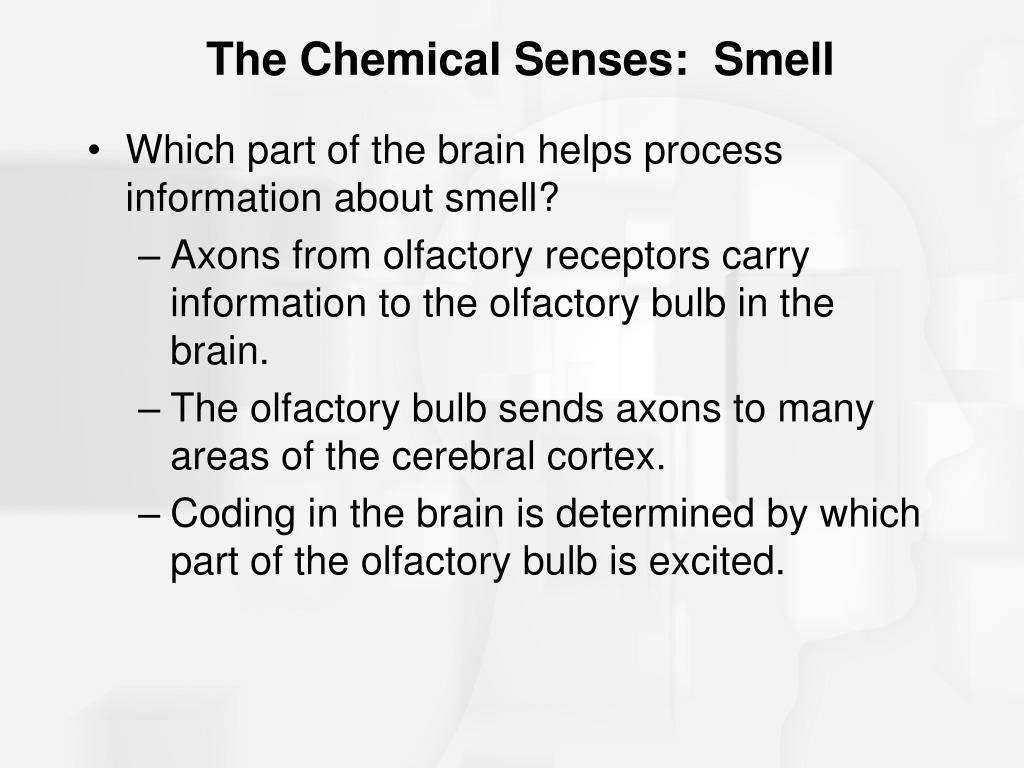The Chemical Senses:  Smell
