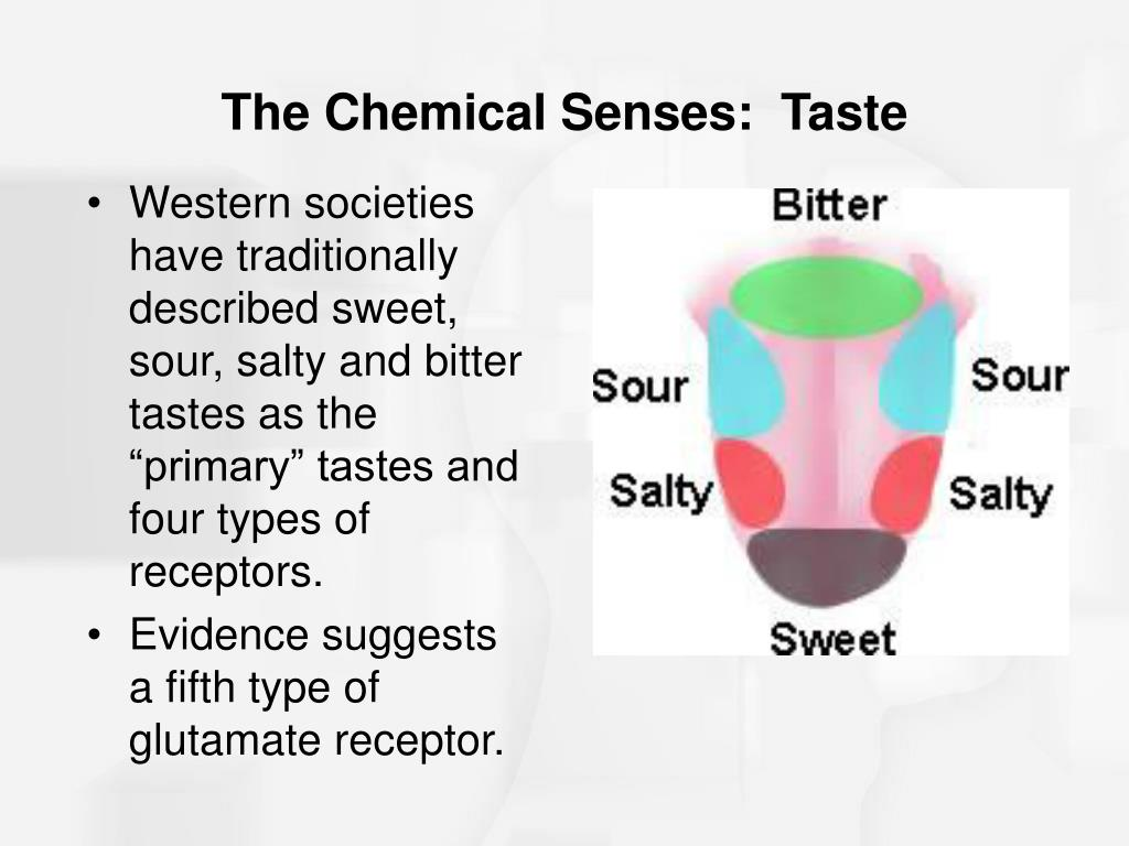"Western societies have traditionally described sweet, sour, salty and bitter tastes as the ""primary"" tastes and four types of receptors."