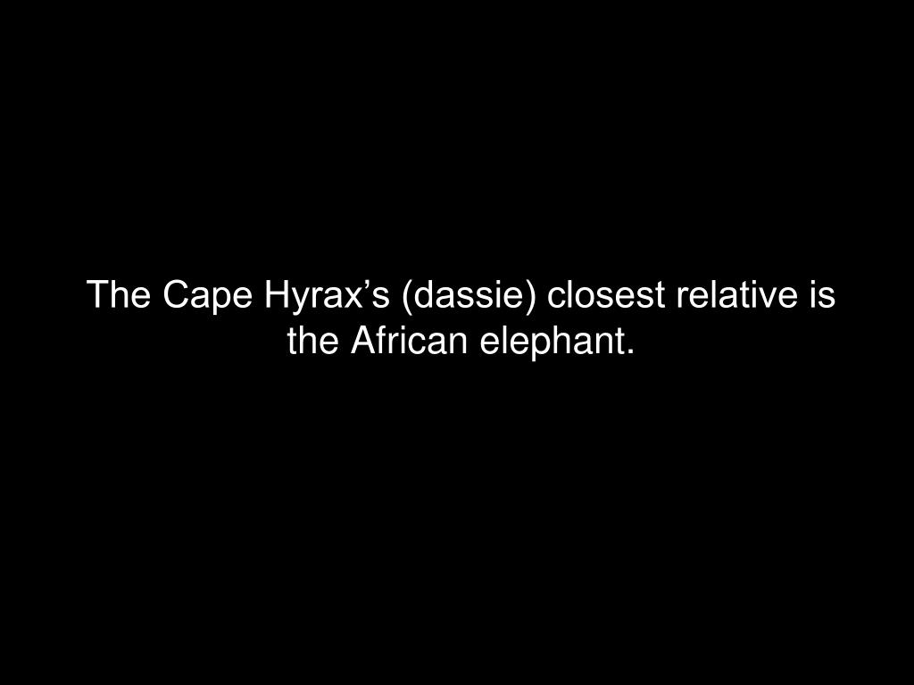 The Cape Hyrax's (dassie) closest relative is the African elephant.