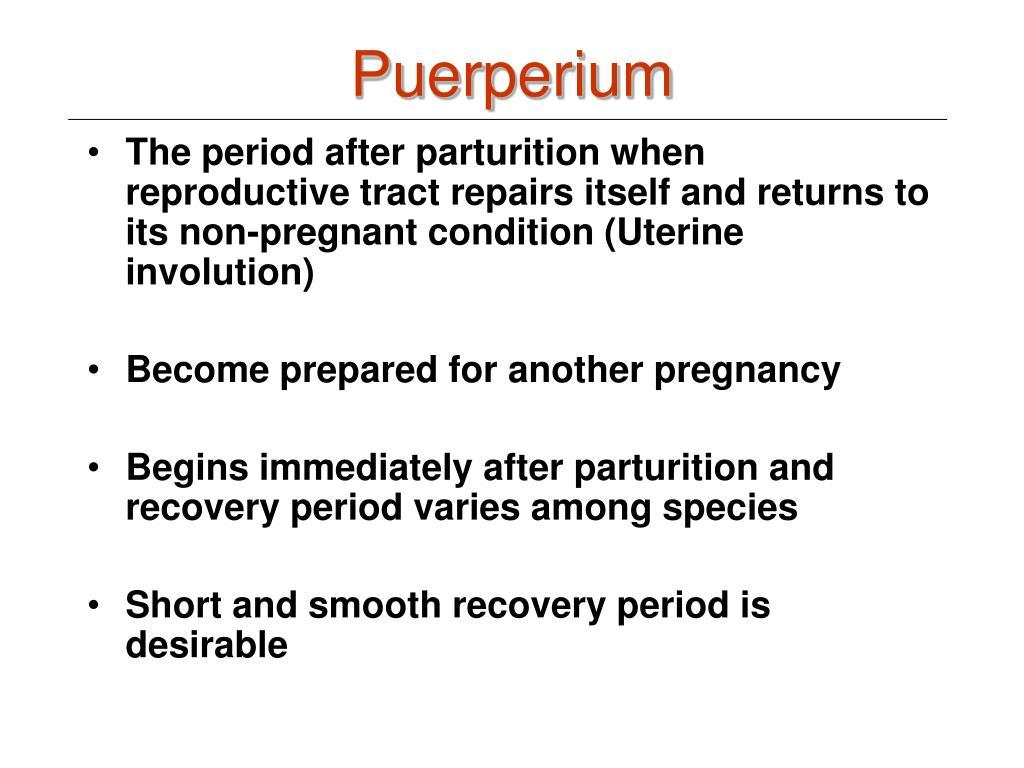 Puerperium