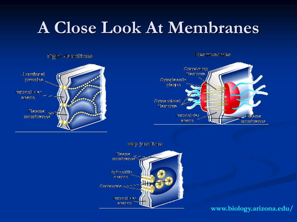 A Close Look At Membranes
