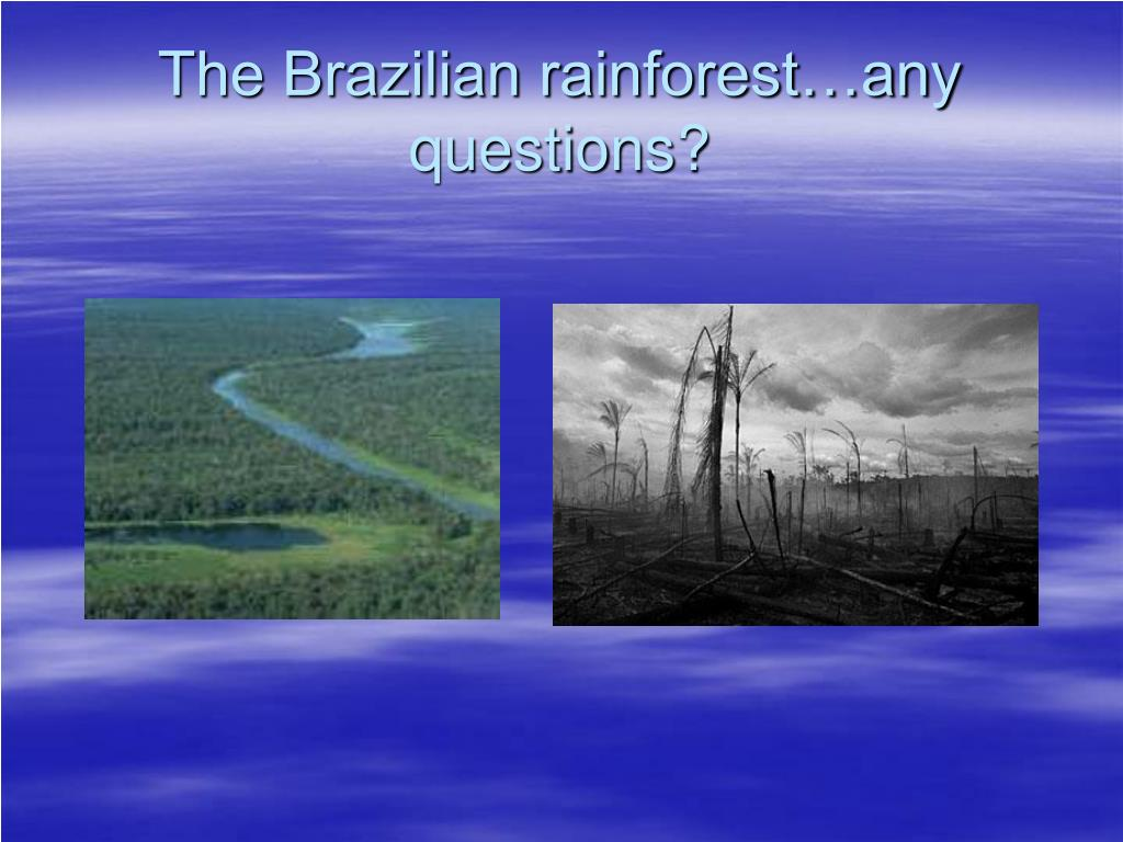 The Brazilian rainforest…any questions?