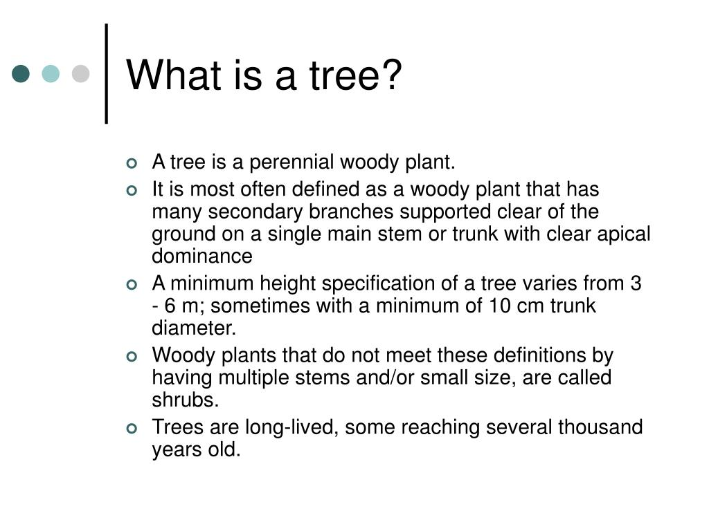 What is a tree?