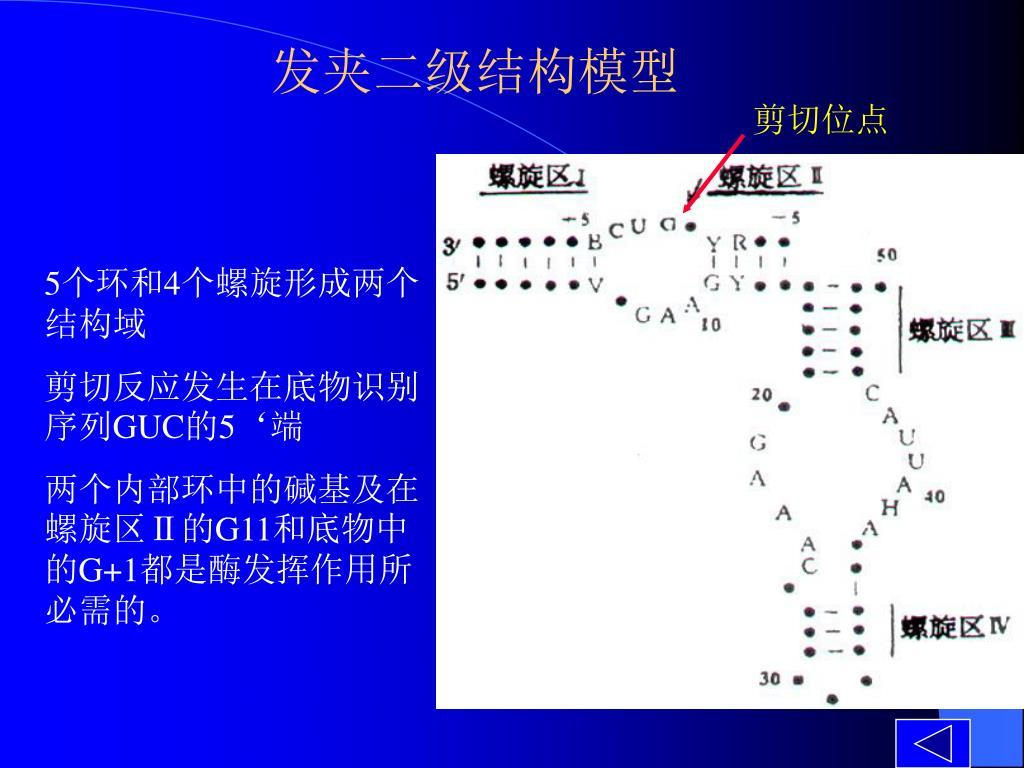 发夹二级结构模型