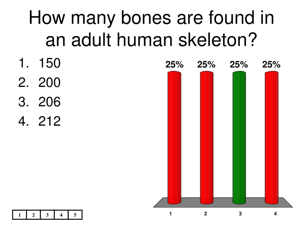 Adult body bones human in many