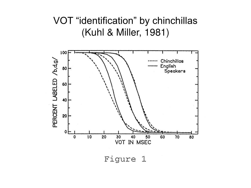 "VOT ""identification"" by chinchillas"
