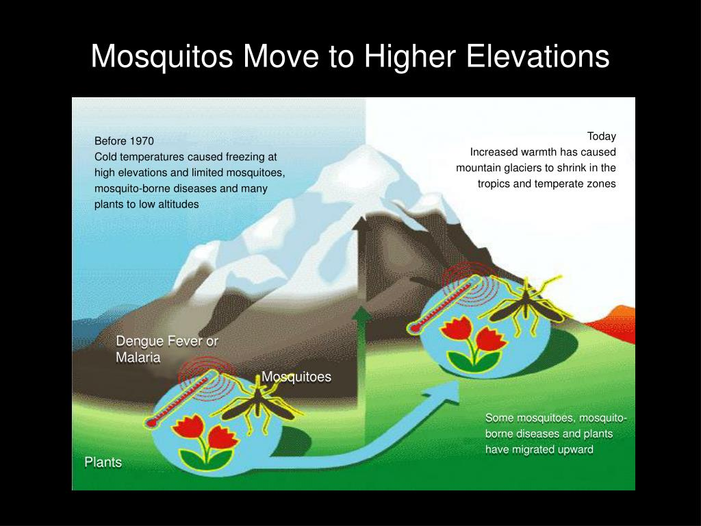 Mosquitos Move to Higher Elevations