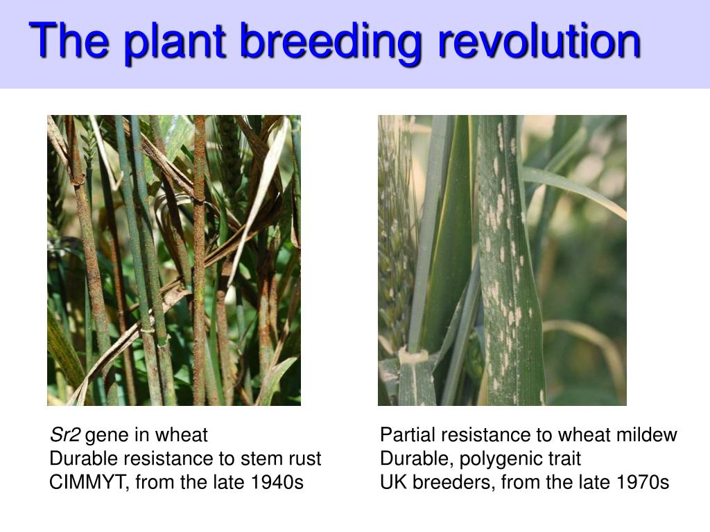 The plant breeding revolution