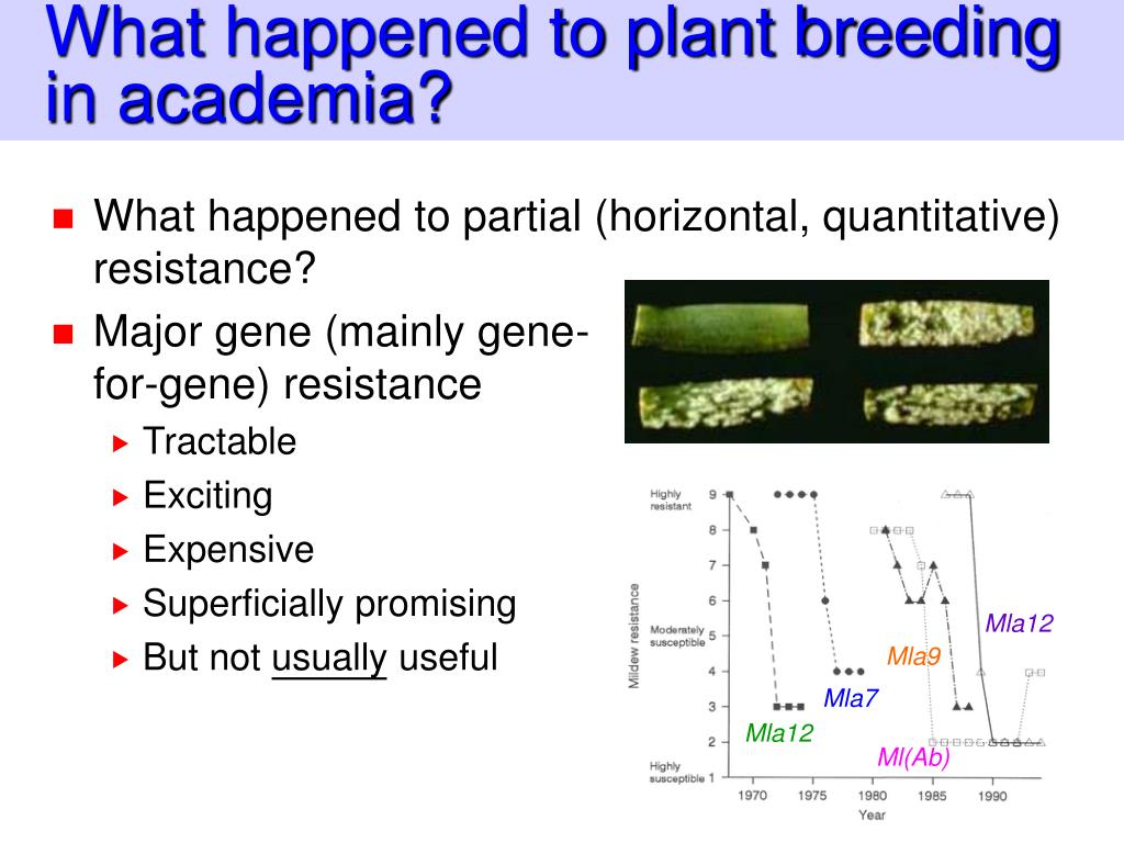 What happened to plant breeding in academia?