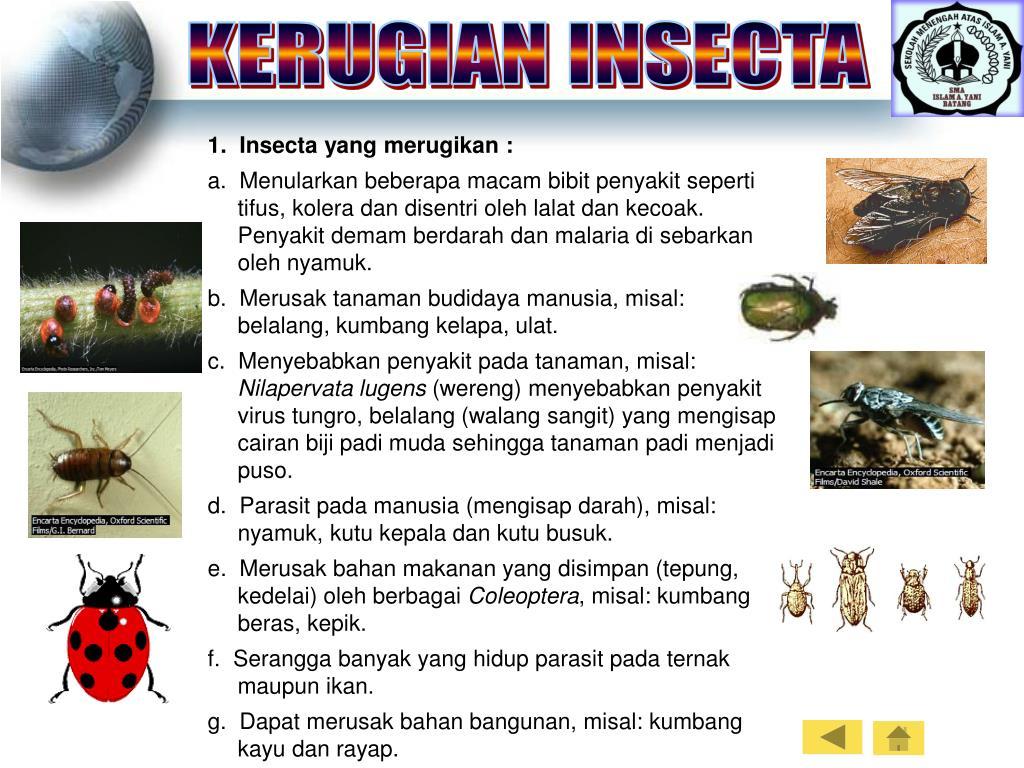 KERUGIAN INSECTA
