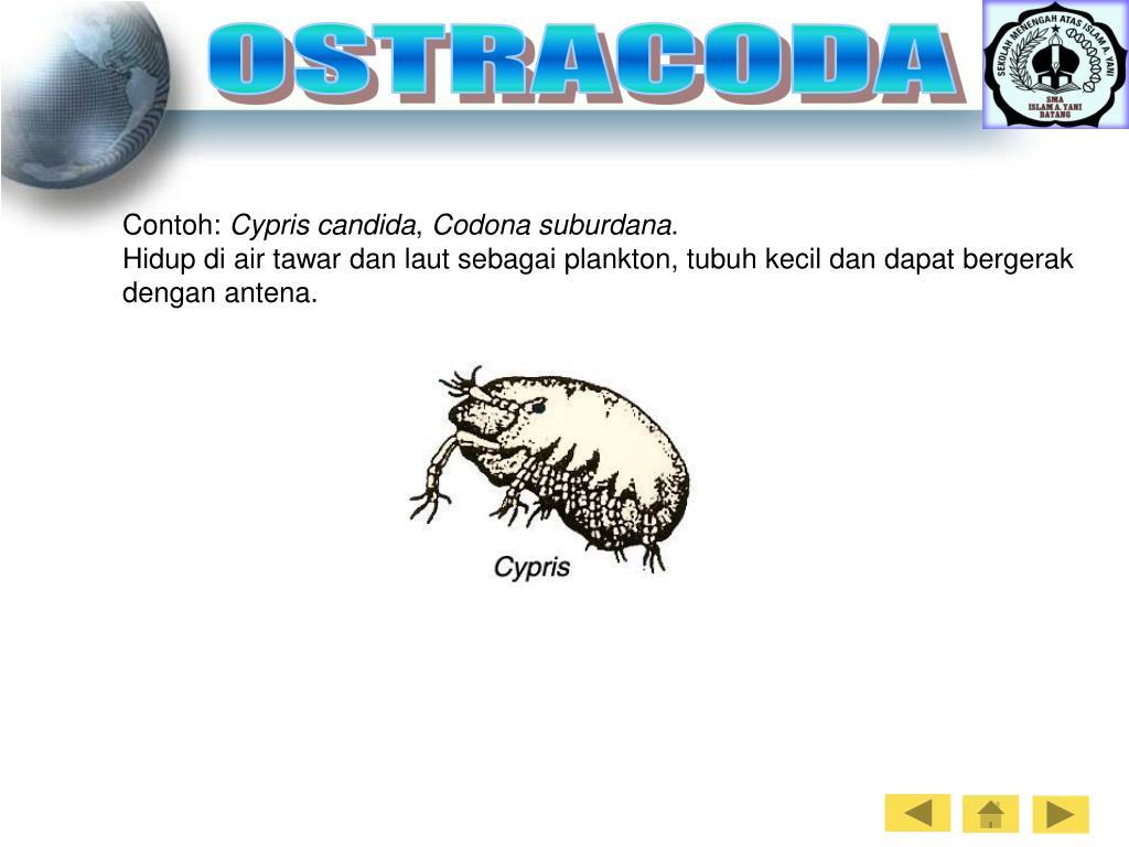 OSTRACODA