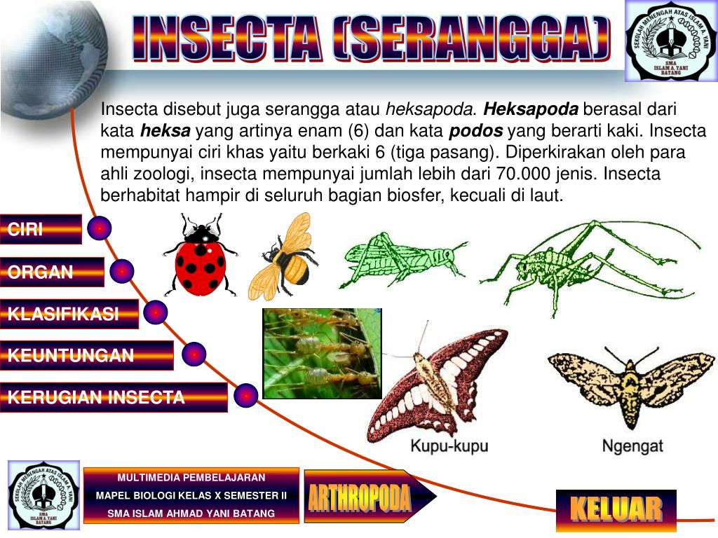 INSECTA (SERANGGA)
