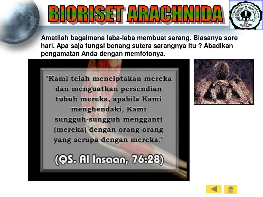 BIORISET ARACHNIDA
