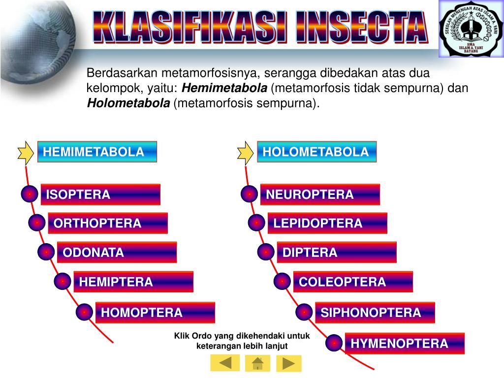 KLASIFIKASI INSECTA