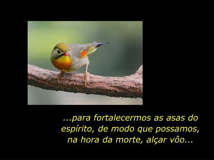 ...para fortalecermos as asas do espírito, de modo que possamos, na hora da morte, alçar vôo...