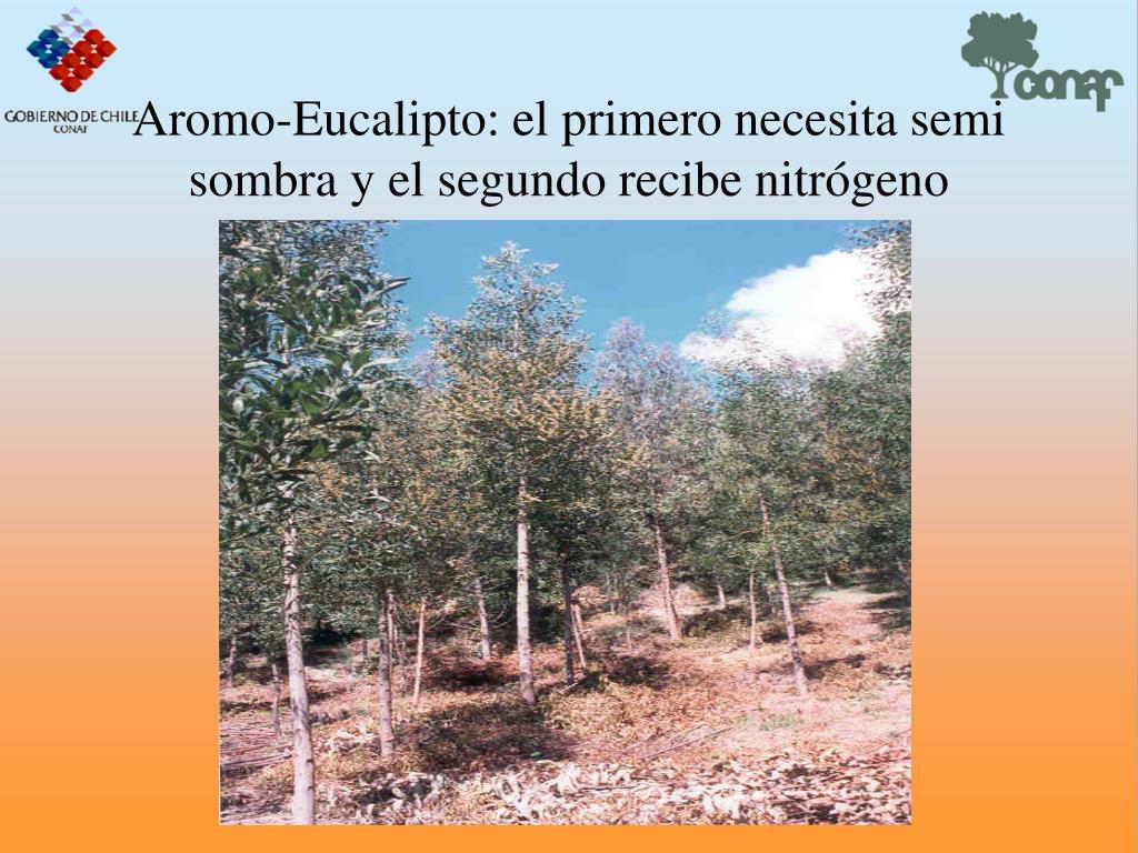 Aromo-Eucalipto: el primero necesita semi sombra y el segundo recibe nitrgeno