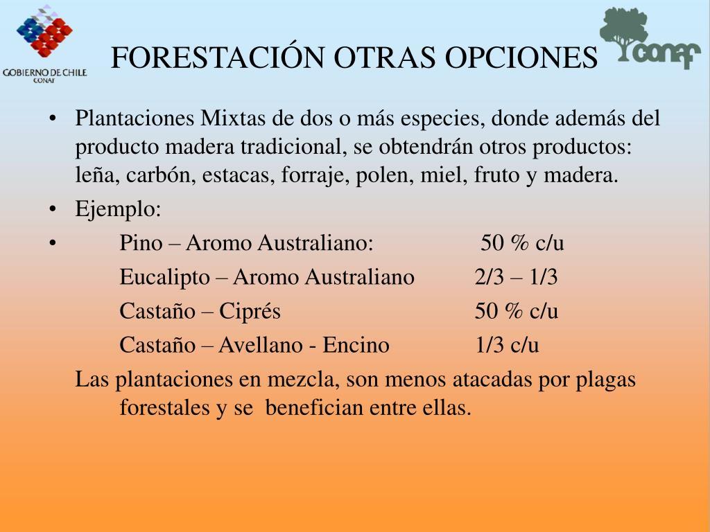 FORESTACIN OTRAS OPCIONES