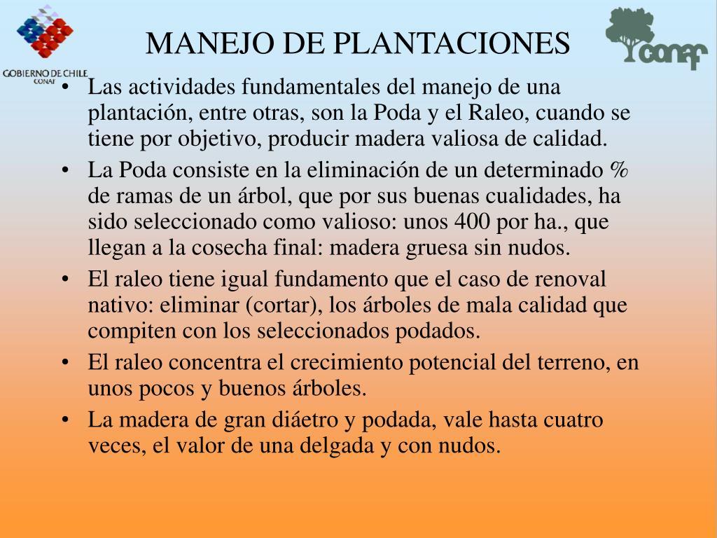MANEJO DE PLANTACIONES