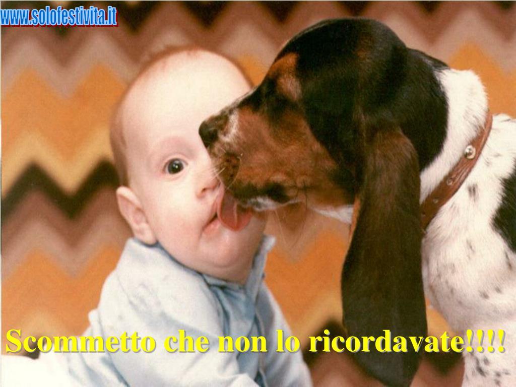 www.solofestivita.it