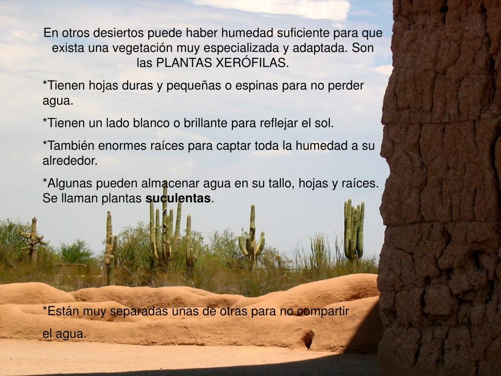 En otros desiertos puede haber humedad suficiente para que exista una vegetación muy especializada y adaptada. Son las PLANTAS XERÓFILAS.