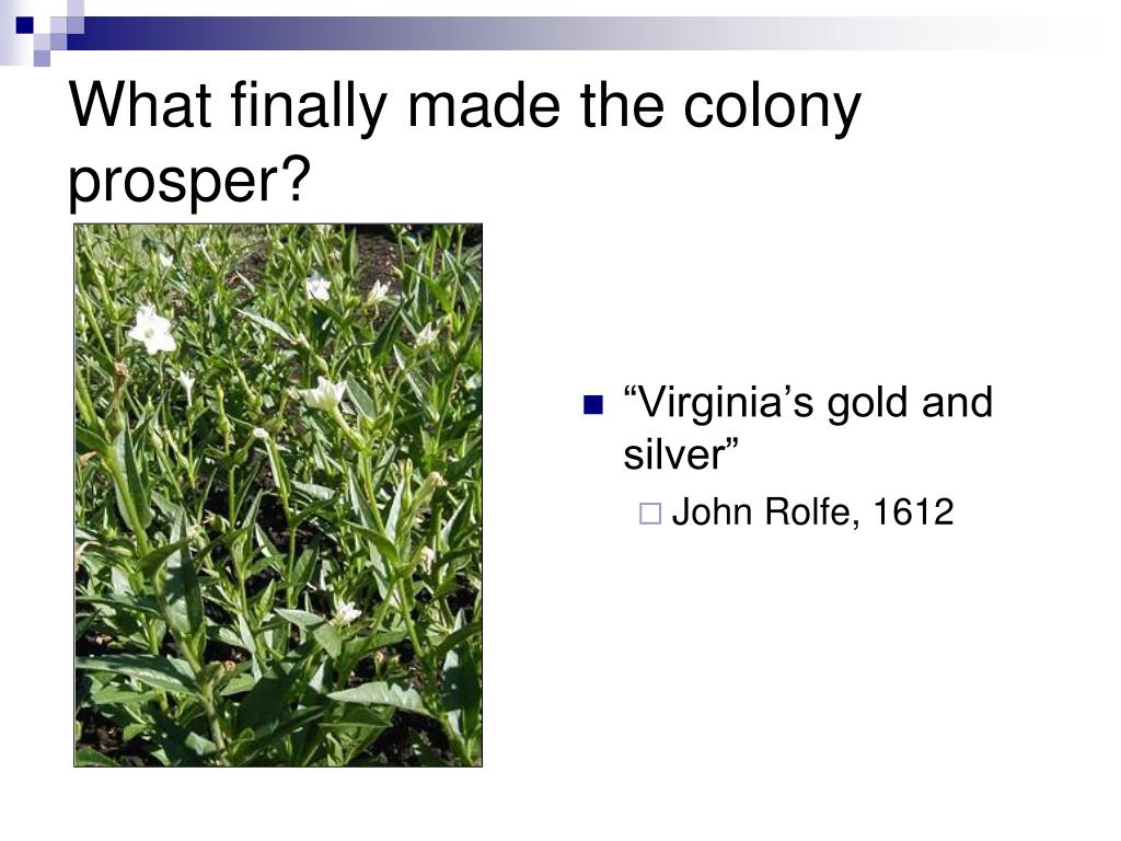 What finally made the colony prosper?