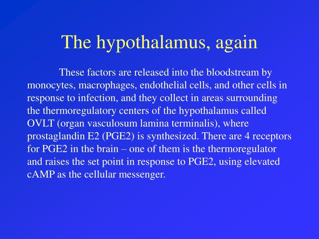 The hypothalamus, again