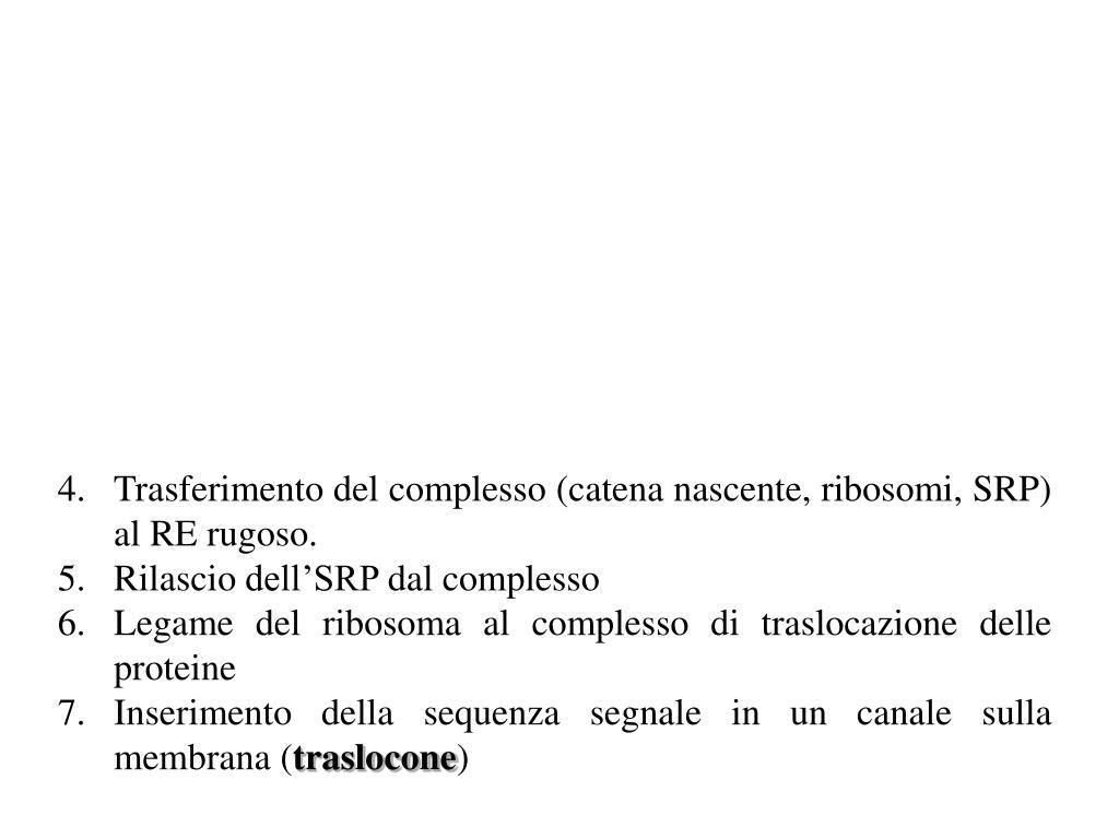 Trasferimento del complesso (catena nascente, ribosomi, SRP) al RE rugoso.
