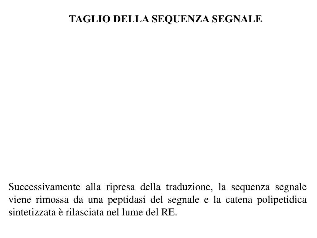 TAGLIO DELLA SEQUENZA SEGNALE