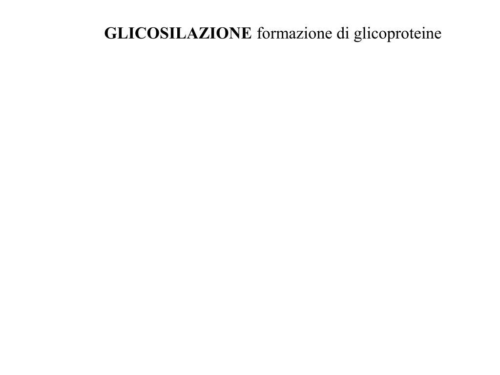 GLICOSILAZIONE