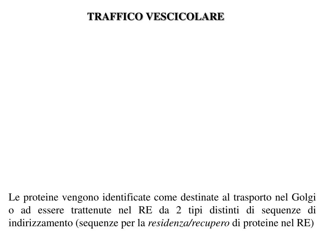 TRAFFICO VESCICOLARE