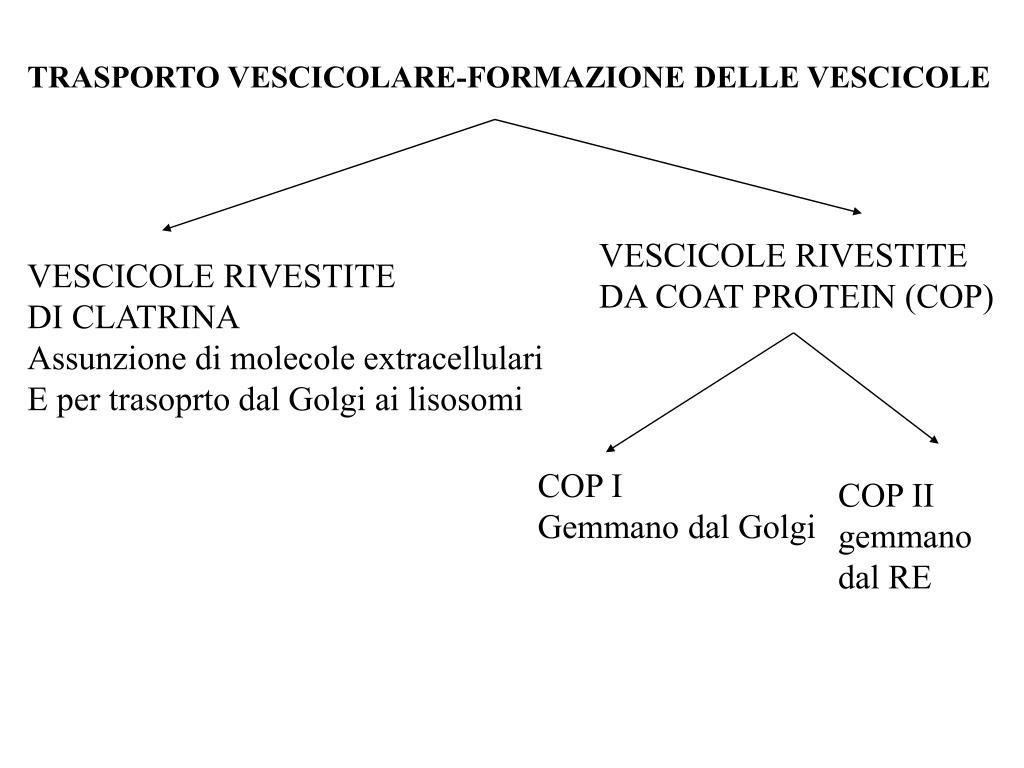 TRASPORTO VESCICOLARE-FORMAZIONE DELLE VESCICOLE
