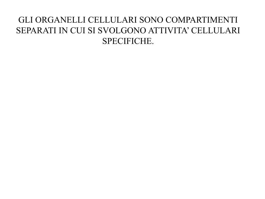 GLI ORGANELLI CELLULARI SONO COMPARTIMENTI