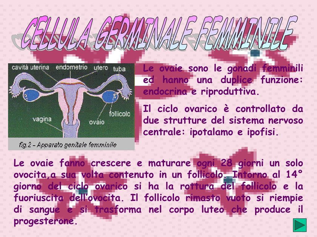 CELLULA GERMINALE FEMMINILE