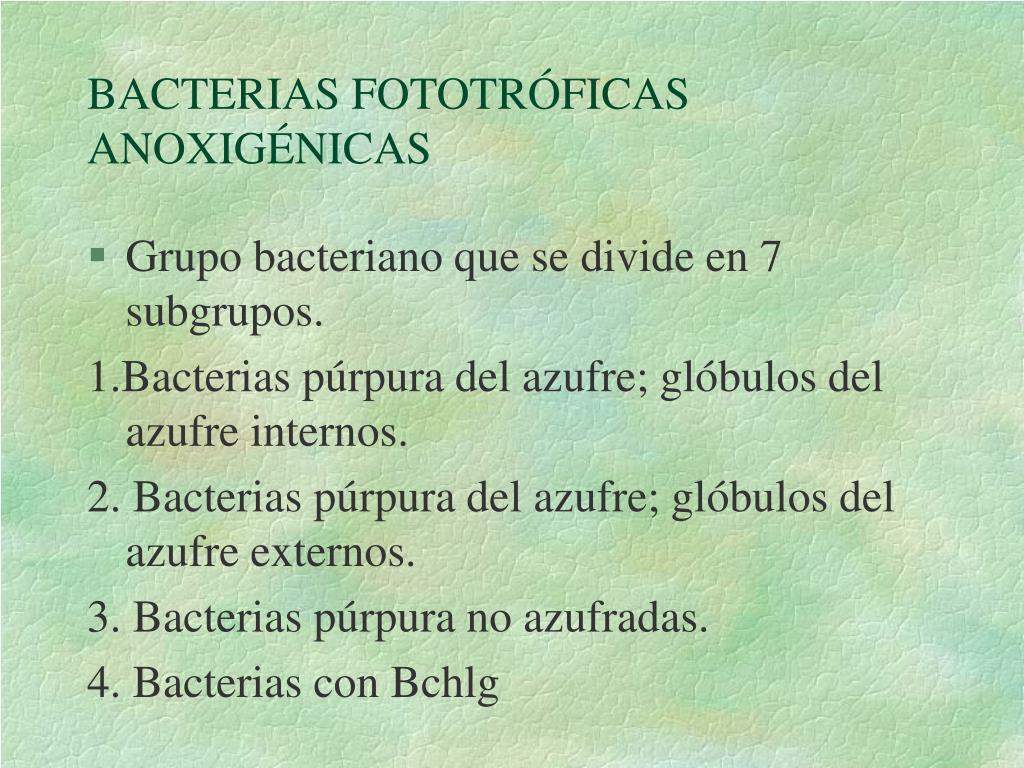 BACTERIAS FOTOTRÓFICAS ANOXIGÉNICAS