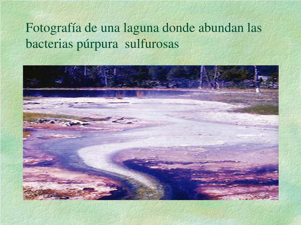 Fotografía de una laguna donde abundan las bacterias púrpura  sulfurosas